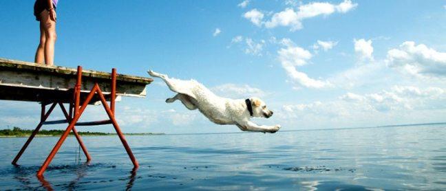 130224-Dog-Diving-Ocean1
